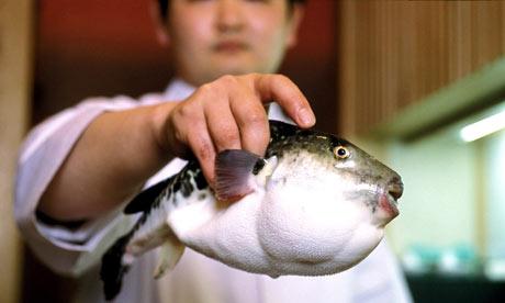 Blowfish-001